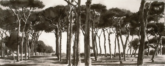 Wendy Artin, Parasol Pine Panorama, 2008, wc on Khadi paper, 76x30 cm